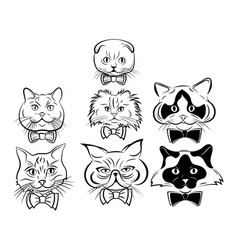 set cartoon cats face collection cute vector image