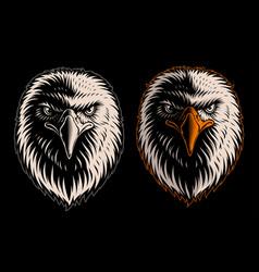 White head eagle vector
