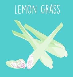 fresh lemon grass plant and slice vector image vector image