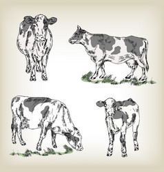 Hand drawn cow set vector