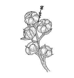 Cotton branch sketch vector