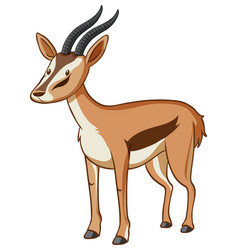 Cute gazelle standing on white background vector