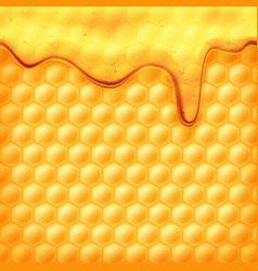 honey flows on honeycombs vector image