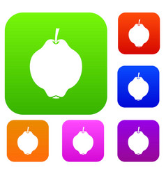 Quince fruit set collection vector