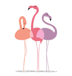 varicoloured flamingos on a white background vector image