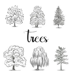 Trees sketch set graphic forest vector