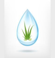 Aloe inside waterdrop vector