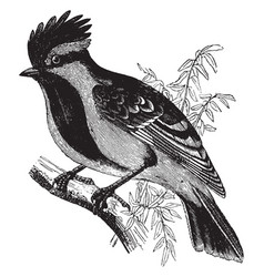 Black lored tit vintage vector