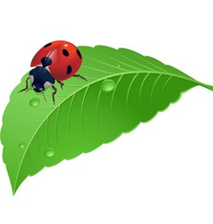 ladybird on grass with water drops vector image