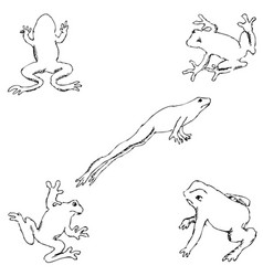 frogs sketch by hand pencil drawing by hand vector image