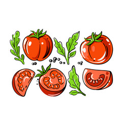 colored tomatoes set on white background vector image
