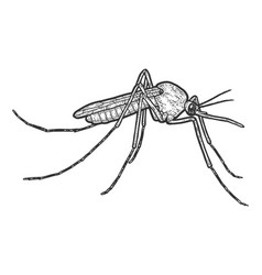 Mosquito insect isolated sketch scratch board vector