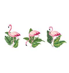 set exotic flamingos tropical wild animal vector image