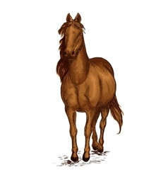 Strong brown arabian horse mustang portrait vector