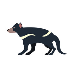 tasmanian devil isolated marsupial wild beast vector image