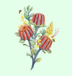watercolor australian banksia composition vector image