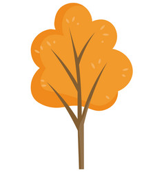 yellow tree in autumn park forest or garden plant vector image