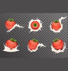 Strawberry milk cream curl splash drops fruit vector