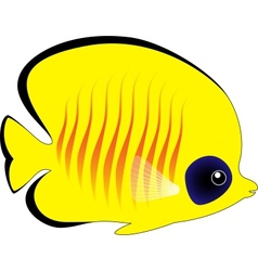 Butterfly Fish Isolated on White vector image