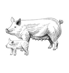 Hand drawn pig and piglet vector