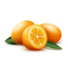 Orange kumquat fruits and green leaves vector