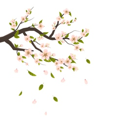 Cherry Blossom Branch of Tree with Flying Petals vector image