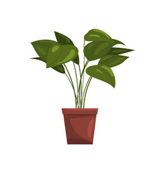 house plant in brown pot element for decoration vector image