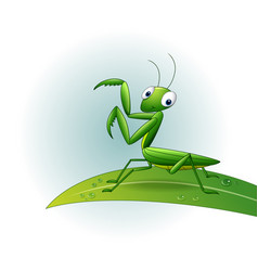 Cartoon praying mantis on leaf vector