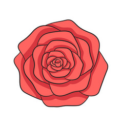 hand drawn red rose isolated on white vector image