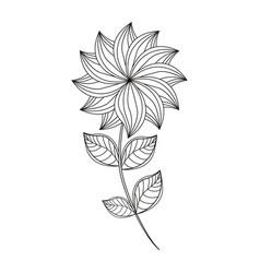 dahlia flower decoration line vector image vector image