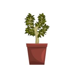 Bonsai tree indoor house plant in brown pot vector