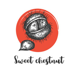 Sweet chestnut isolated sketchy style vector