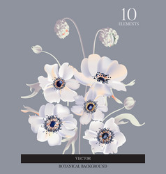 wedding anemone white flowers tender soft bloom vector image