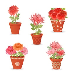 collection of chrysanthemum planted in ceramic vector image vector image