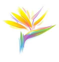 bird of paradise flower vector image vector image