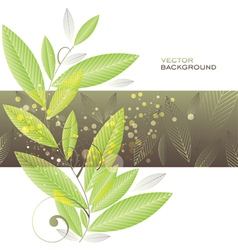Green leaves background vegetable template vector image