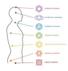Chakra system human body energy centers vector