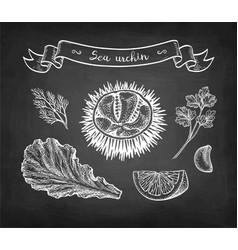 Chalk sketch sea urchin vector