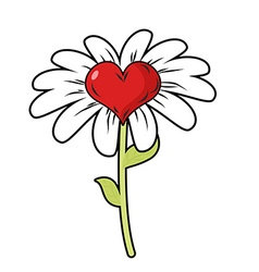 Flower of love Red heart symbol of love and Daisy vector image