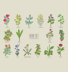 Set of herbs collection hand drawn medical vector