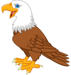Cartoon bald eagle vector