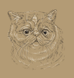 Exotic shorthair cat on brown background vector