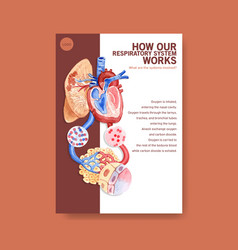 Information about anatomy respiratory vector