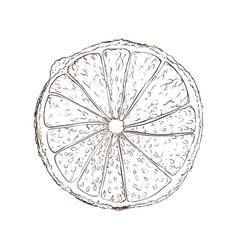 Lemon fruit draw vector