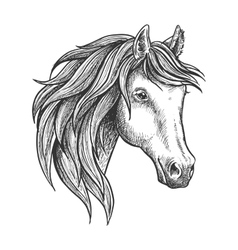 Purebred stallion of andalusian breed sketch vector image