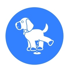 Pissing dog icon in black style for web vector image vector image