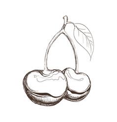 Cherries fruit draw vector