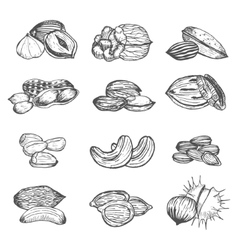 Nuts Set Hand Draw Sketch vector