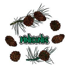 Pine cone set vector