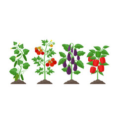 planting and cultivation concept in vector image